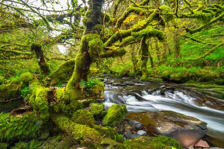 Mountain creek of Clare Glens in Co. Limerick, Ireland