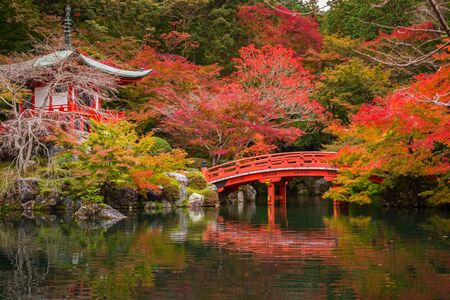 Beautiful japanese garden with colorful maple trees in autumn, Kyoto Foto de archivo