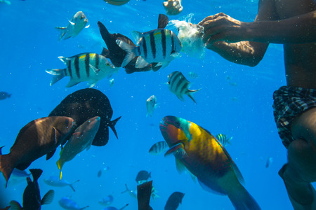 Red Sea underwater scenery with tropical fishes, Egypt
