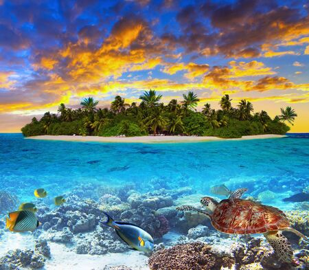 Tropical island of Maldives on the Indian Ocean at sunset with marine life