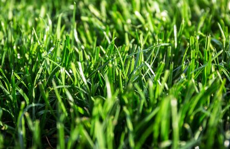 Lush grass in the house garden Archivio Fotografico