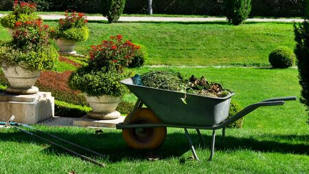 Garden-wheelbarrow filled with the herbs collected after the gardeners work in a park Stok Fotoğraf