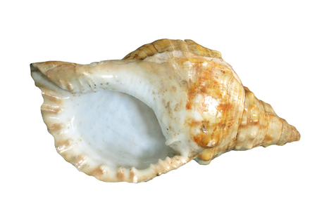 Shell  Isolated white Stock Photo