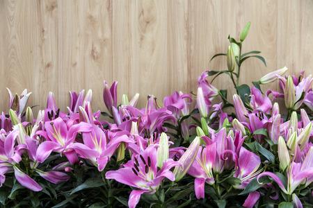 Purple lilies   Garden lilies , purple