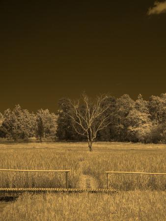 infrared fine art photography landscape : surreal infrared art photography