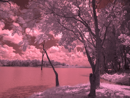 infrared fine art photography landscape : surreal infrared art photography