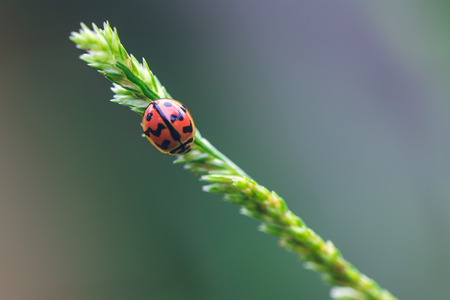little red lady bug photo