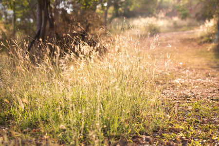 soft light tone, Abstract nature background with grass in the meadow and sunset photo
