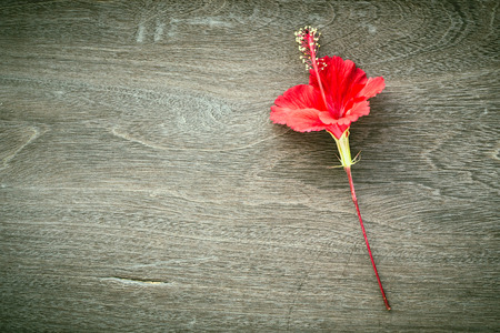 Abstract red hibiscus flower blossom on wood background Stockfoto