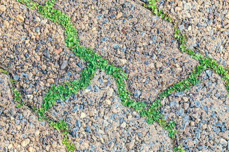 cobblestone road: Abstract urban background. Green grass grows through modern gray cobblestone road pavement