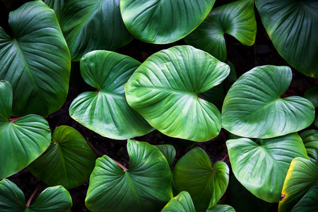 organic plants: Green plant Stock Photo