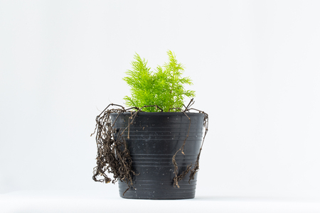 replaced: Nature needs your care. image of plant new species replaced dead plant.