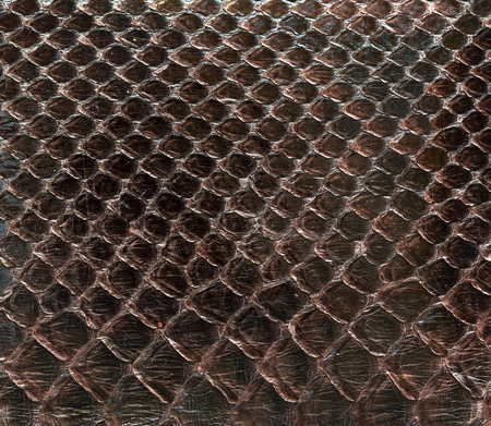 continuously: Pattern of boa skin texture