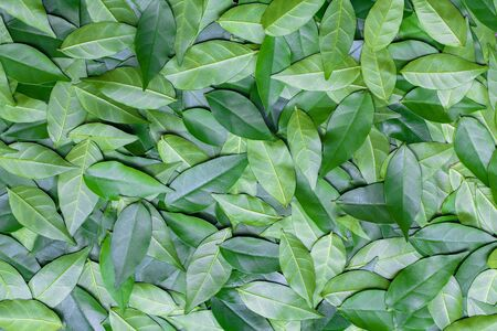 textile design: Leaves background. Seamless leaves pattern