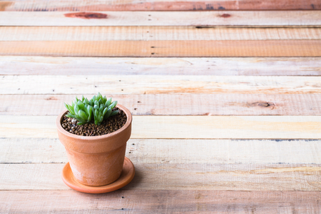green life: Cactus in pot for decorated over wooden background, vintage soft tone Stock Photo