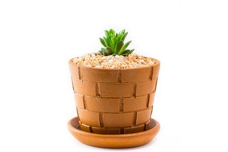 ollas de barro: Echeveria agavoides en macetas de arcilla Foto de archivo