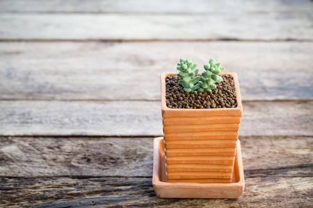 ollas de barro: cactus en macetas de arcilla en el fondo de madera