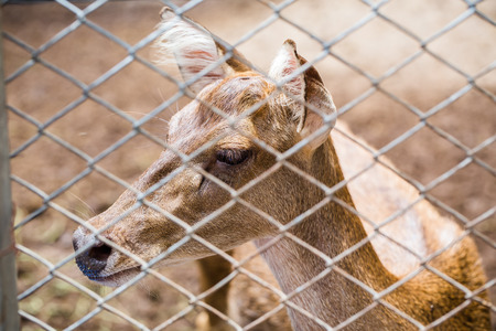 deer  spot: Deer in a Zoo