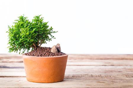 ollas de barro: árbol bonsai pequeño en las macetas de barro