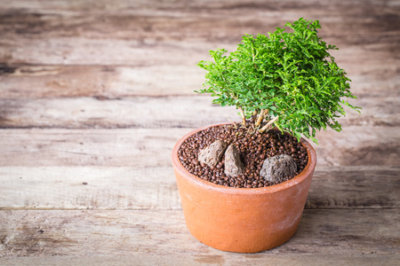 vintage tone of Small decorative tree on wooden floor, Small bonsai tree in the clay pots