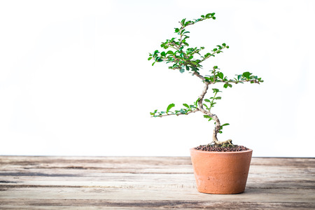 vintage tone of Small decorative tree little plant on wooden floor with copy space for add text message, Small bonsai tree in the clay pots