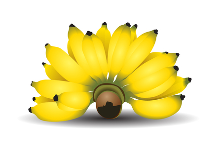 Cultivated banana thai Vector illustration.