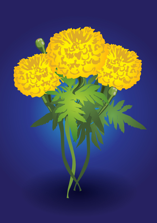 marigold flower of king thailand Vector illustration.