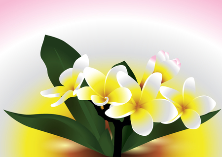 Plumeria patter design illustration.