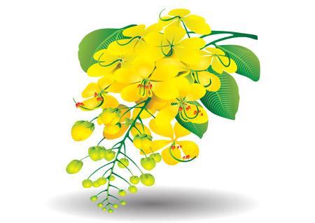 Golden Shower Tree thai