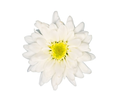 White flower on white background Stock Photo - 9108230