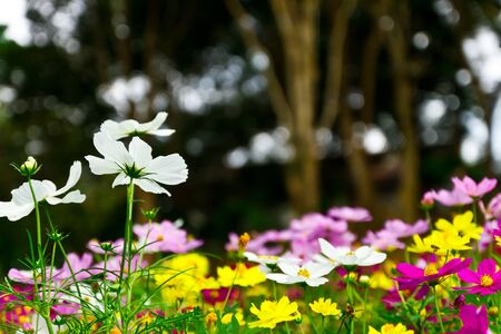 Colorful flowers Stock Photo - 10995470