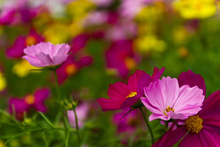 Colorful flowers Stock Photo - 10995478