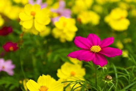 Colorful flowers Stock Photo - 10995477