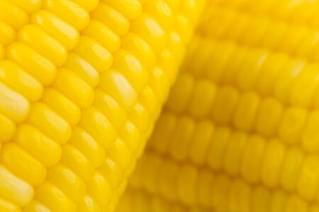 Corn close up photo