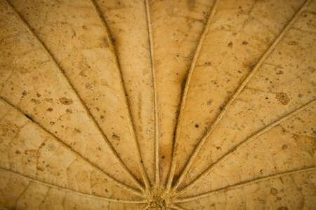 dried leaf: Grungy dried leaf background