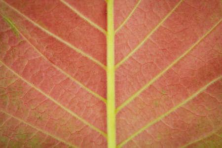 Red leaf background