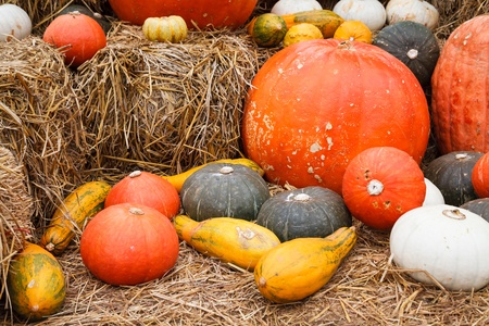 Close up of pumpkins and gourds on straw photo