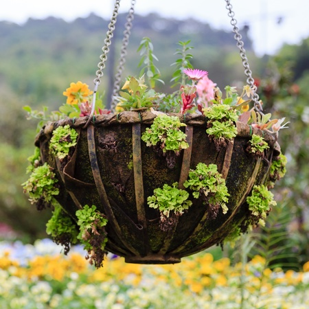 Close up of flowerpot in the park with shallow depth of field Stock Photo - 18562390