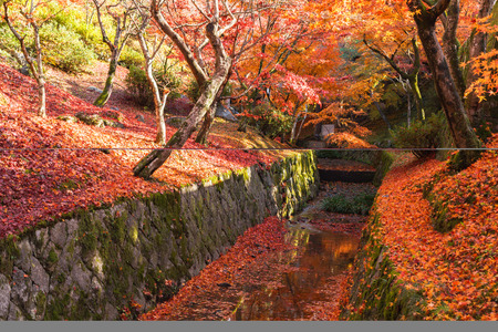 water fall: Red maple leaf fall around water canal at Kiyomizu-dera temple, Kyoto, Japan