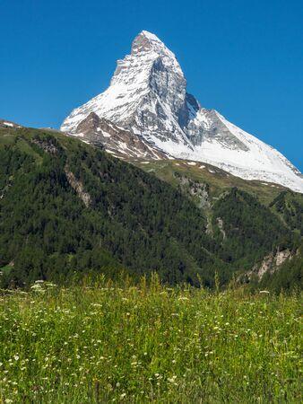 Matterhorn peak in sunny day with flower field in foreground,  Zermatt, Switzerland.