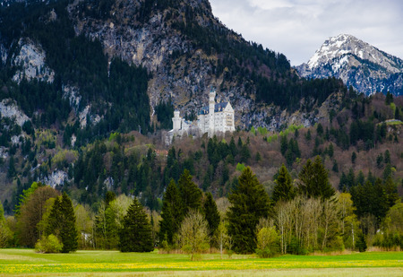 schwangau: Neuschwanstein castle, with yellow flower field in foreground and mountain in the background, Fussen, Germany.
