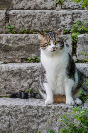 Fat cat sitting on the stone steps and waiting for something.