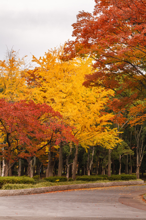 Tourist attraction, Osaka castle garden in autumn with red leaves