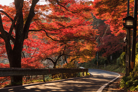 Beautiful scenic road with red leaves tunnel in the morning, Yoshino, Japan.
