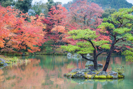Colorful autumn leaves at japanese garden in Kyoto, Kansai, Japan.