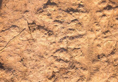 terrain: soil texture Stock Photo