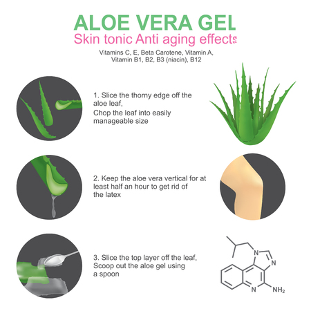 lesion: Aloe vera is a succulent plant species of the genus Aloe. It grows wild in tropical climates around the world and is cultivated for agricultural and medicinal uses. Aloe is also used for decorative purposes and grows successfully indoors as a potted plant Illustration