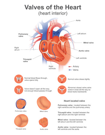 A heart valve opens or closes incumbent on differential blood a heart valve opens or closes incumbent on differential blood royalty free cliparts vectors and stock illustration image 70508161 ccuart Images