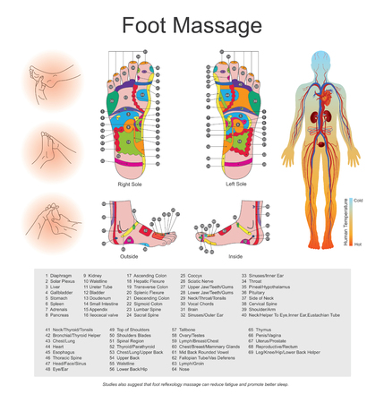 While various types of reflexology related massage styles focus on the feet, massage of the soles of the feet is often performed purely for relaxation or recreation. It is believed there are some specific points on our feet that correspond to different or Stock Vector - 70458310