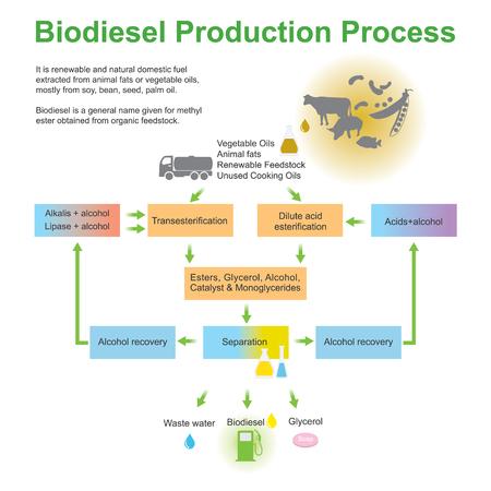 バイオディーゼル生産プロセス。動物性脂肪または植物油から抽出された再生可能エネルギーと自然の国内燃料。イラスト デザイン。  イラスト・ベクター素材